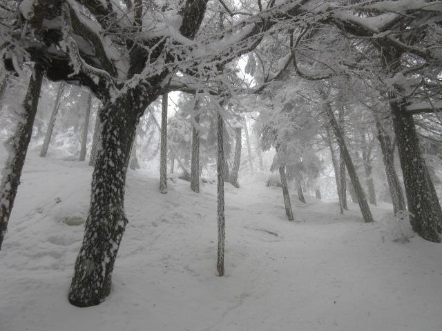21 janvier 2017.  Mont Tremblant.  Conditions printanières en après-midi, déjà en janvier ?
