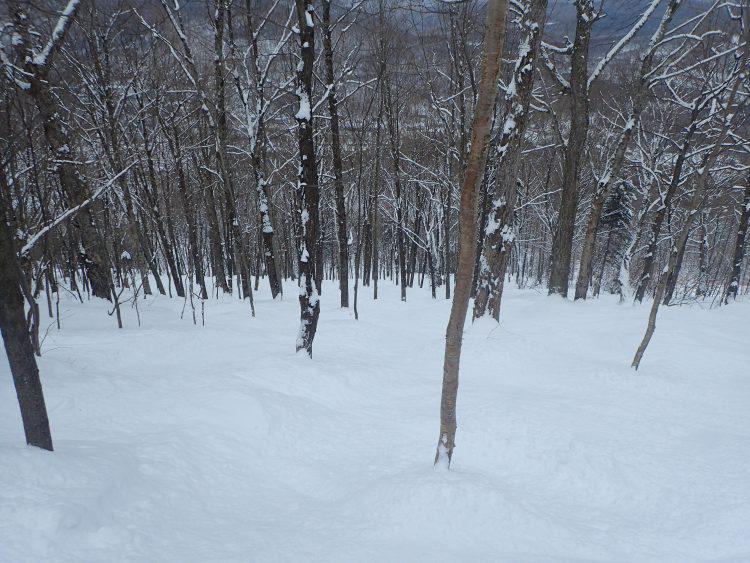 28 janvier 2017- Station de ski Stoneham, Découverte d'un beau sous-bois !!