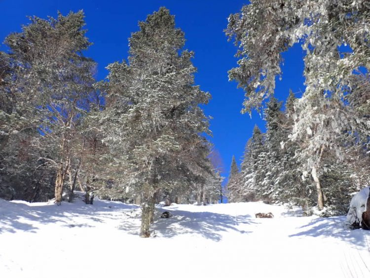Le mont Saint-Anne se couvre de blanc
